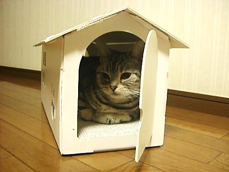 段ボール製 ネコの家 吾輩の家